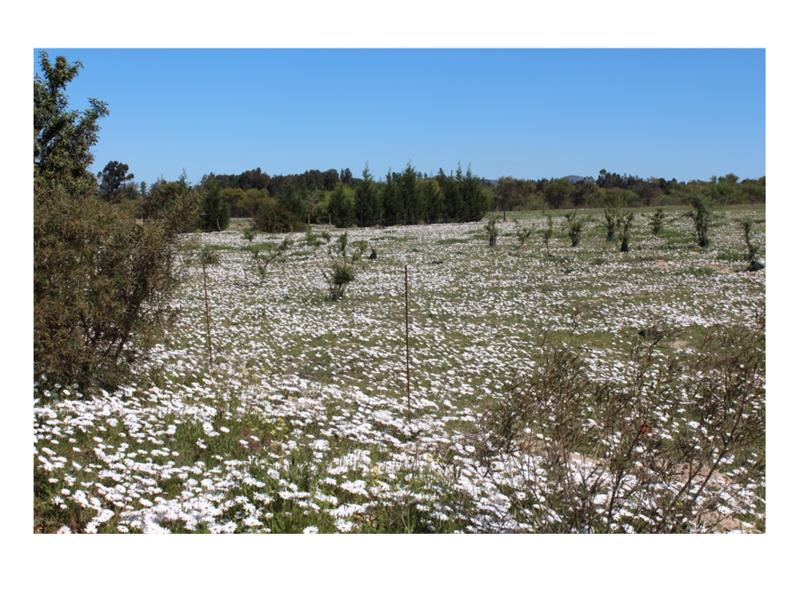 Property For Sale in Tierfontein, Atlantis 37