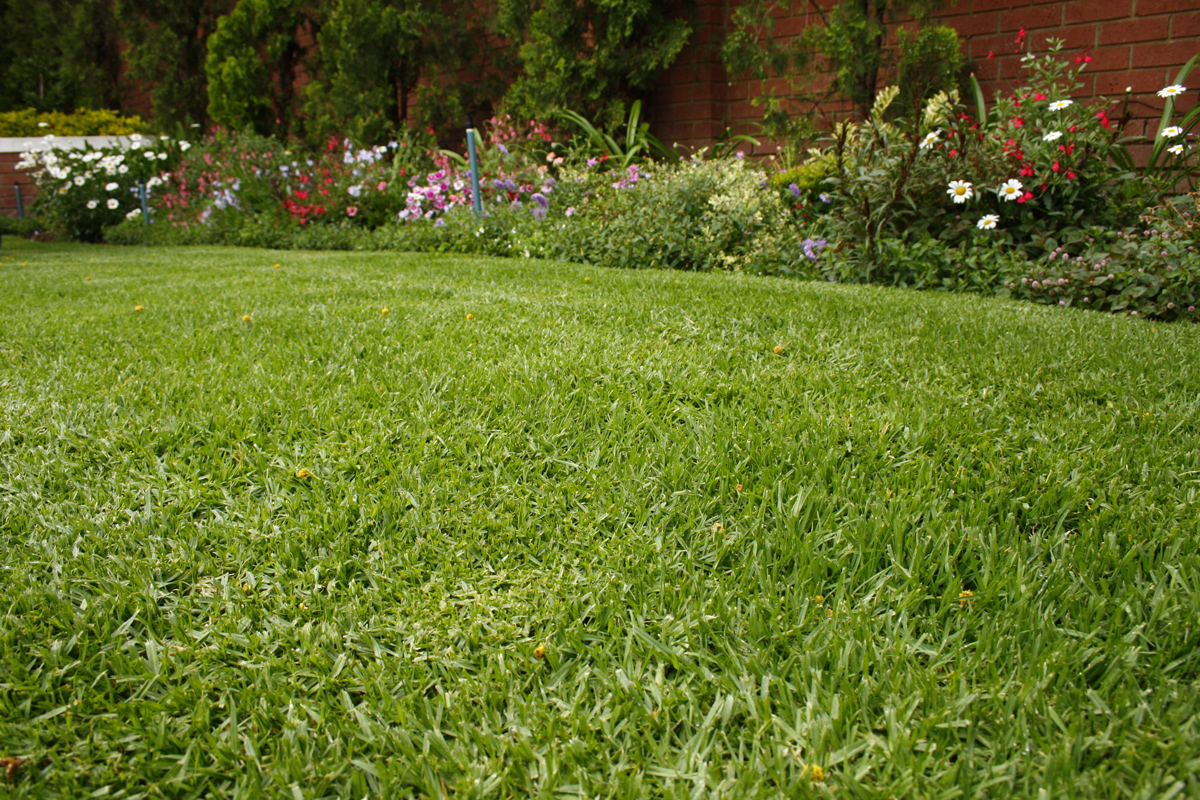 WATER-WISE LAWNS: LAWN OF THE FUTURE By choosing the right variety and using some clever design tips, your lawn can benefit the environment and add beauty to your home. With the recent drought in many parts of South Africa, lawns have become frowned upon as water guzzlers. However, unlike hard surfaces such as concrete and tiles, lawn grass helps clean the air, traps carbon dioxide, diminishes erosion from storm water run-off, improves soil, decreases noise pollution and reduces temperatures, all of which is necessary in built-up environments.
