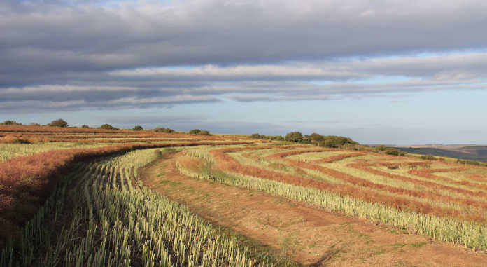 Keeping the farm in the family By Eugene MpikwaneApril 9, 2018 1:23 pm A big concern for farm owners is how to ensure their farms stay in the family for generations to come.