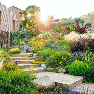 Gardening in drought conditions: an intro we shared tips on landscaping in drought – from increasing the soil's water-holding capacity to caring for your lawn. Read on for more expert tips on gardening when there's a water shortage